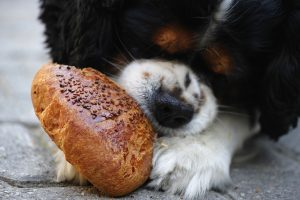 How Private Equity and Venture Capital Investors Are Eating Their Own Dogfood