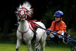 Do You Bet on the Jockey or the Horse